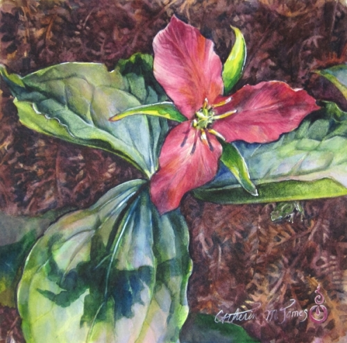 To Age With the Grace of a Trillium