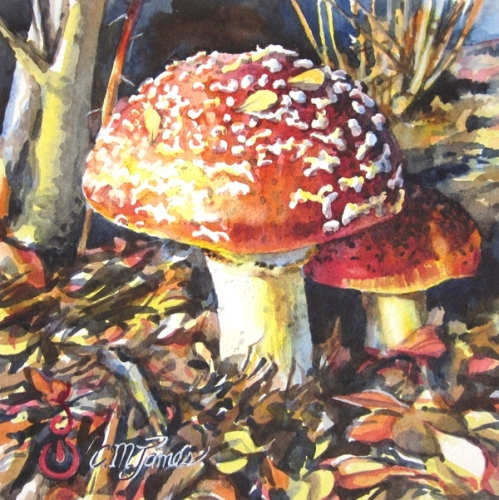 Painting of toadstools by artist Catherine M. James (large view)