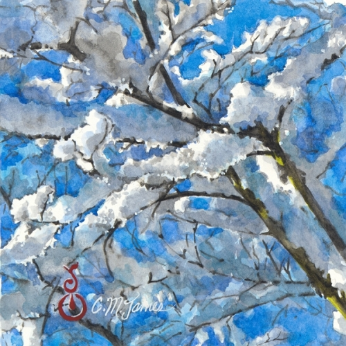 Snowy Branches in Sunlight #2