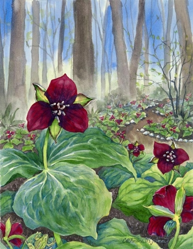 2013 Trillium Tour Poster Artwork for Cottage Lake Gardens by Catherine M. James (large view)