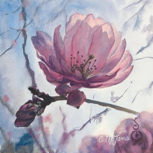 Cherry Blossom Solo
