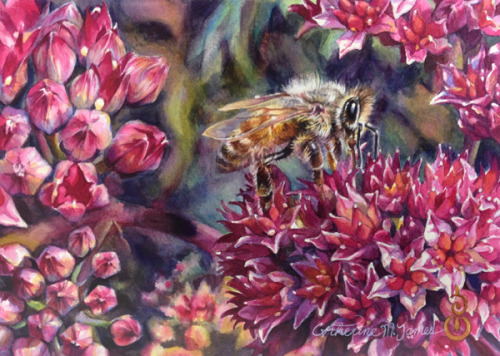 How the Honey Bee Sees the World