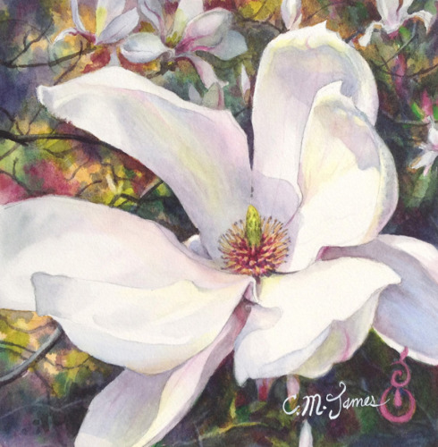 Magnolia Blossom Opening #1
