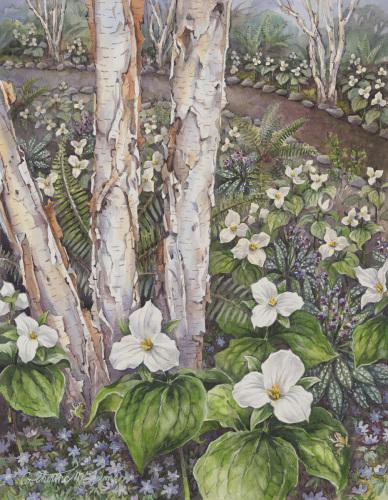 Trillium Grandiflorum in Birch Meadow (large view)