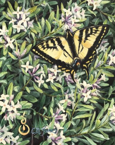 Swallowtail (large view)