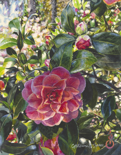 Camellia by Catherine M. James