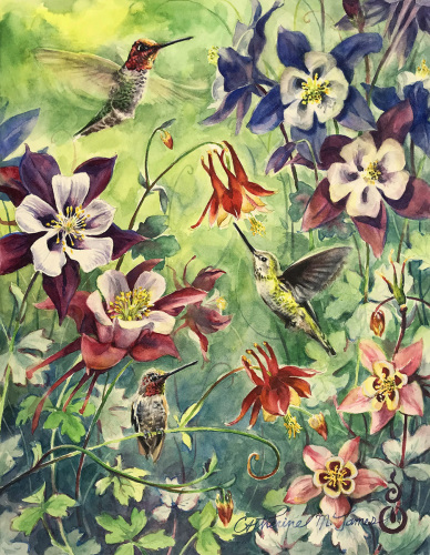 Hummingbirds in Columbine (large view)