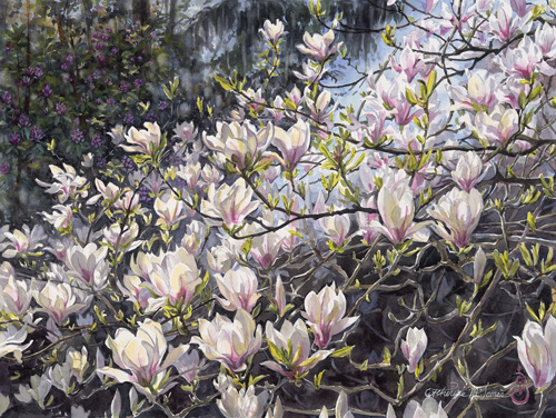 Magnolia Cascade (large view)