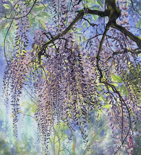 Wisteria Waterfall (large view)