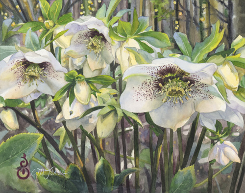 Early Spring, Hellebores