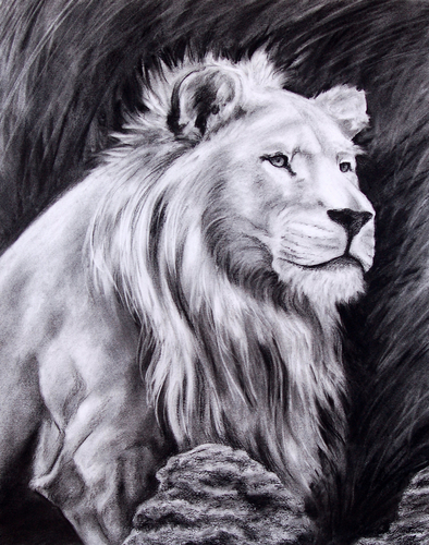Lioness with a Mane by Concetta Mattioni