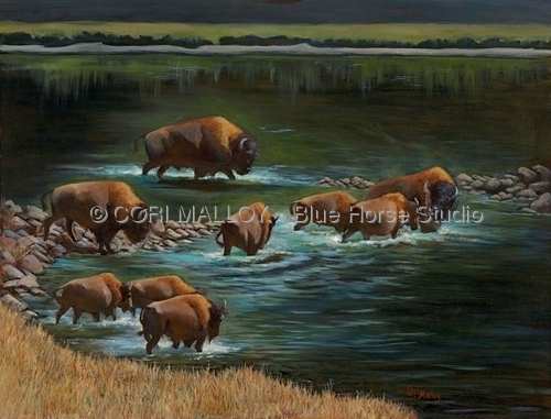 Buffalo Crossing at Yellowstone