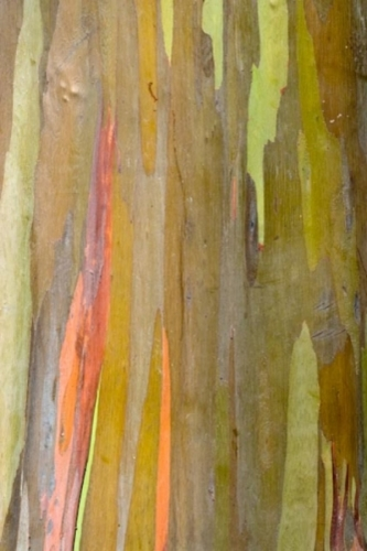 Eucalyptus 5 by christopher costanza