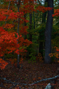 Red Forest (thumbnail)