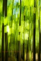Forest Abstract_1 (thumbnail)