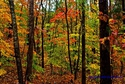 Colorful Woods 9 (thumbnail)