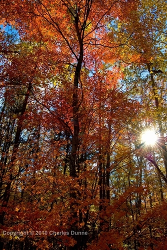 Sun and Autumn Leaves