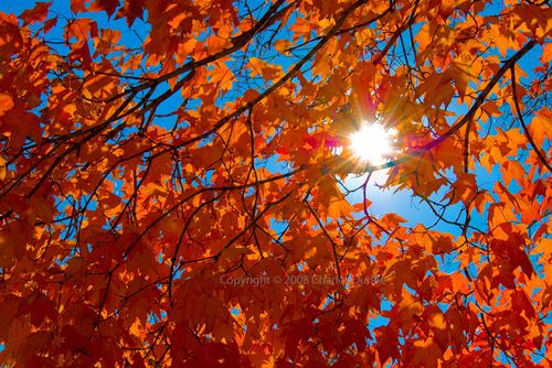 Sunlit Fall (large view)