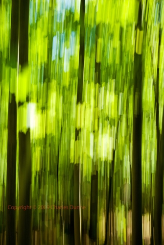 Forest Abstract_1