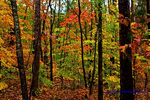 Colorful Woods 9
