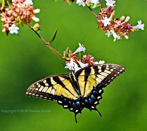 ETS Butterfly 3 by Images by Charles Dunne