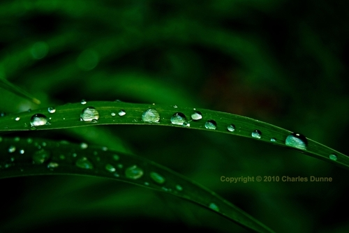 Blade of Grass with Raindrops.