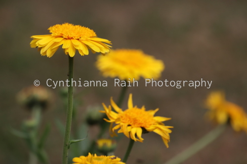 Focus by Cynthianna Raih Photography