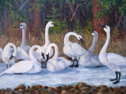 Oil Paintings  Birds