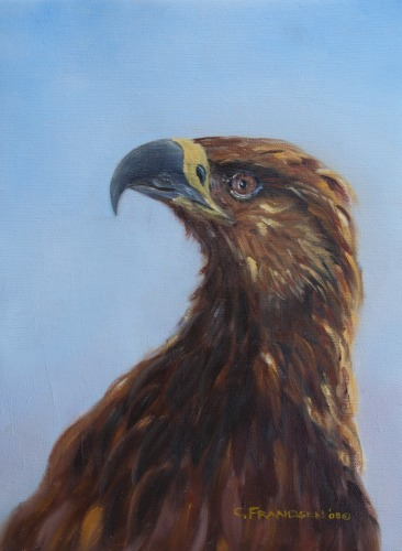 Golden Eagle Study