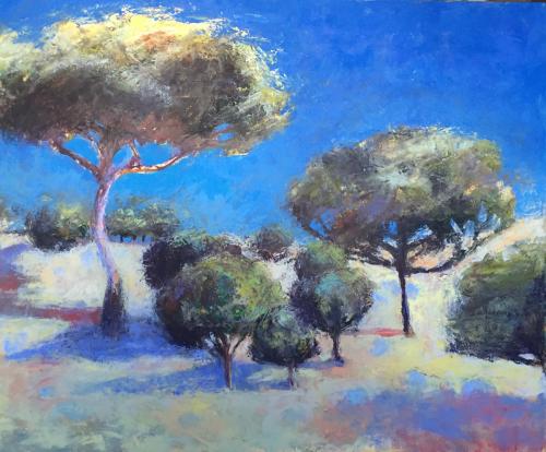 Pinus Pinea 1