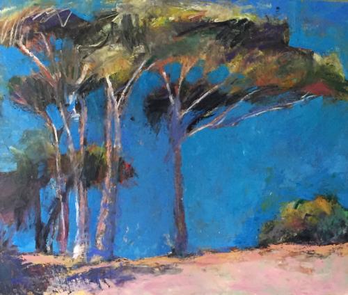 Pinus Pinea 2