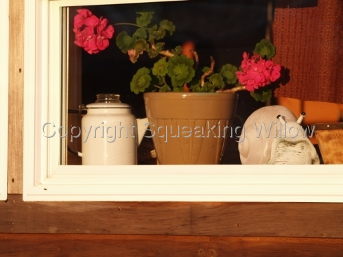 Cuilean captures the old-fashioned feel and scent of a potted geranium, stems heavy with blossoms, on a windowsill. (large view)