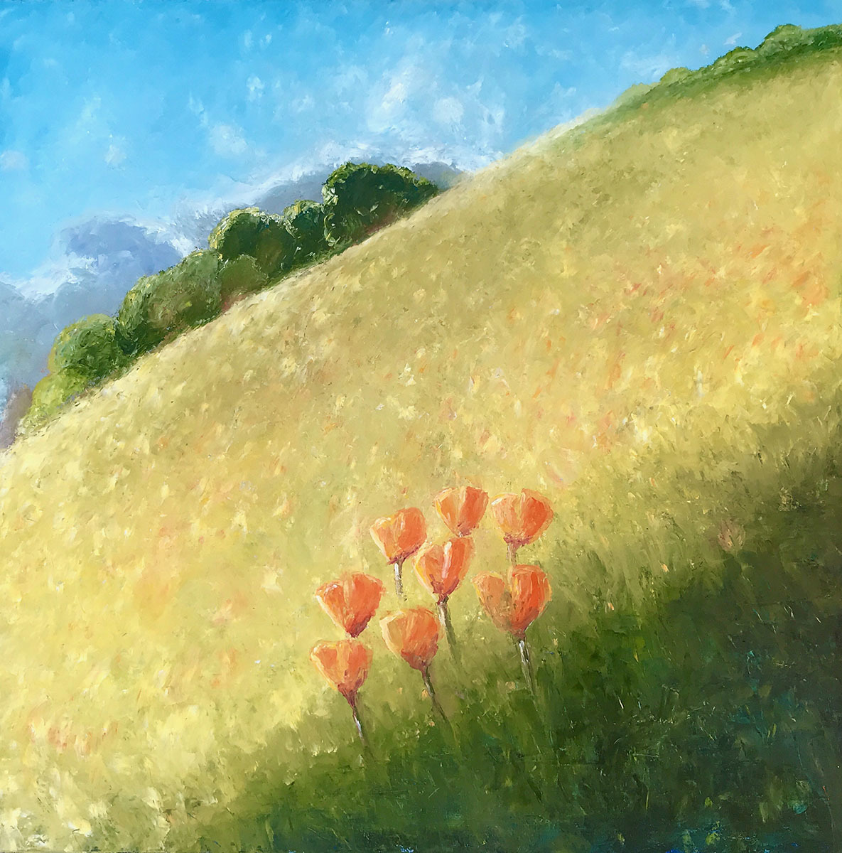 Hill flow -Poppies (large view)