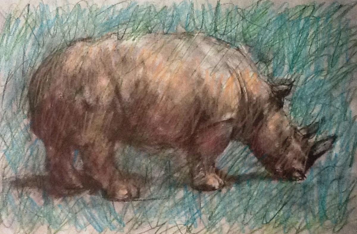 rhino (large view)