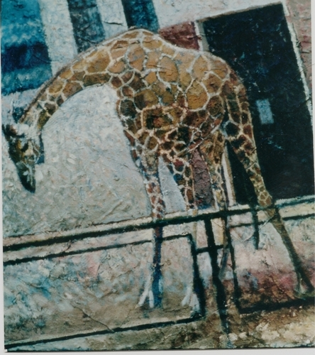 Giraffe (large view)