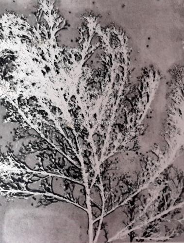 Tumbleweed Series II by Donna Carver