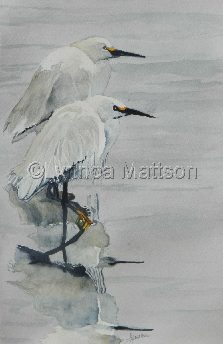 White Egret Reflections (large view)