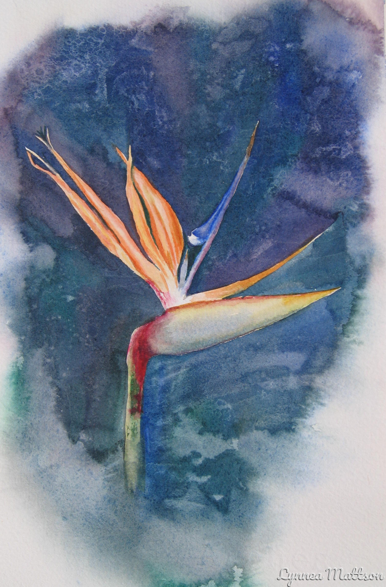 Joe's Bird of Paradise (large view)