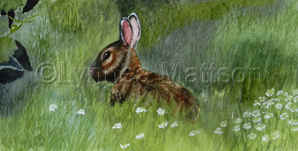 Wild Rabbit (large view)