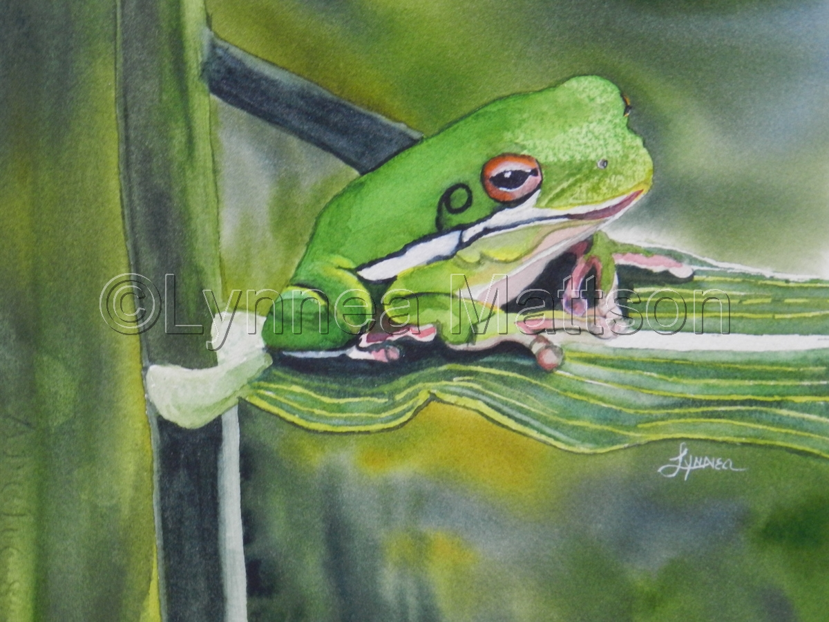 Little Green Tree Frog (large view)
