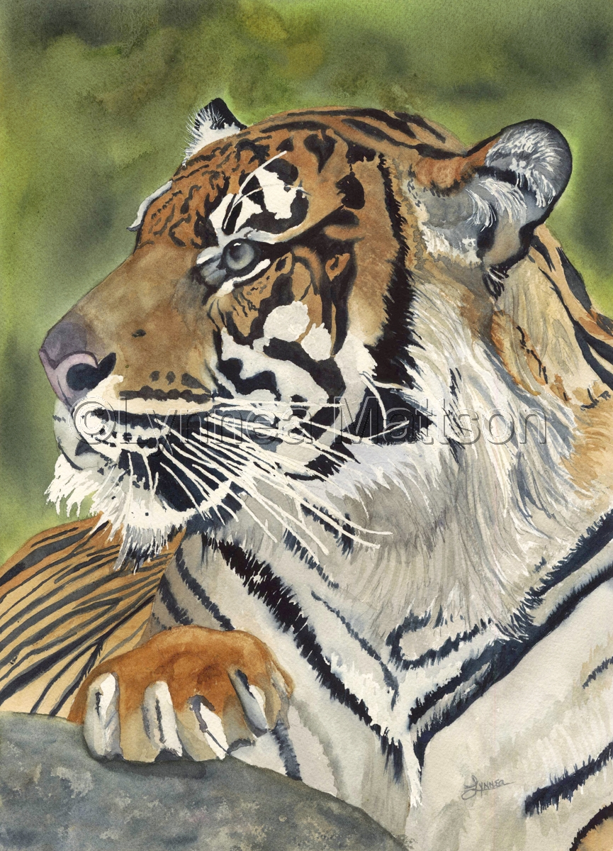 Tiger Series #7 (large view)