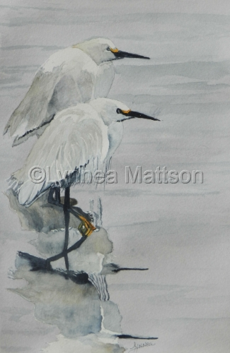 White Egret Reflections