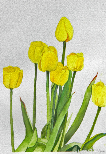 Yellow Tulips (large view)