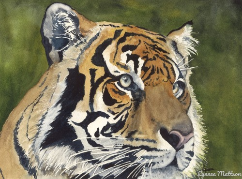 Tiger Series # 2 by Lynnea Mattson Gallery