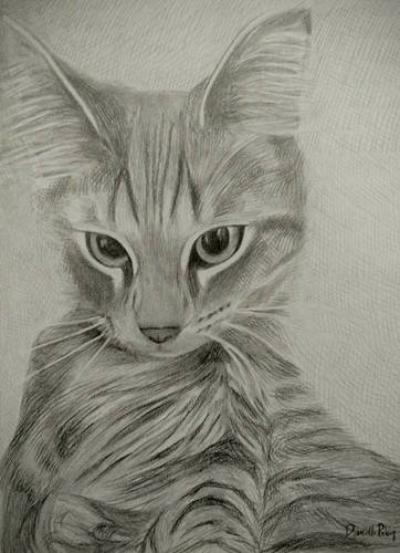 Kitten Drawn in Pencil