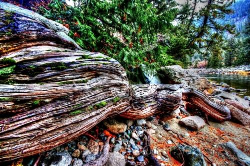Driftwood in the Similkamen