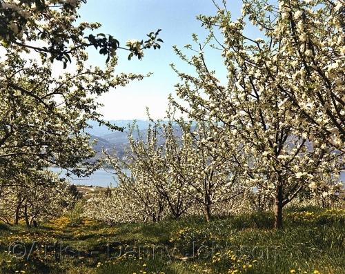 okanagan orchard - naramata