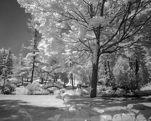 japanese garden by Danica Antich