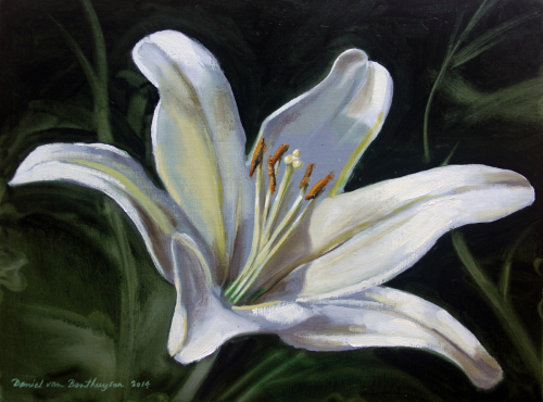 Lily by Daniel van Benthuysen