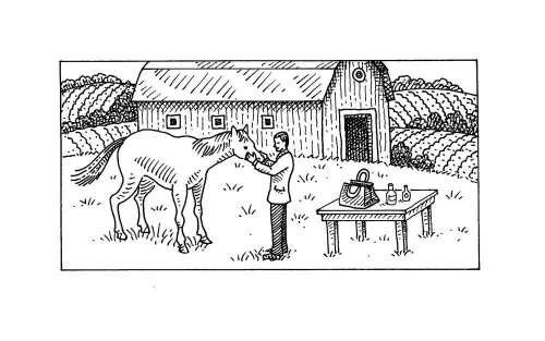 Horse with vet.